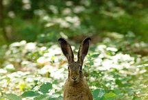 Hazen en konijnen Ria.