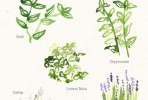 Plants and Insects