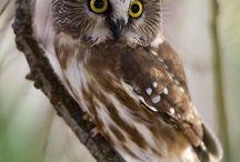 Owls / by Sarahí Wilson