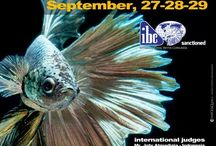 IBC Show Events / by International Betta Congress