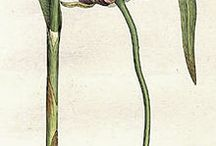 All Hail Allium! It's Onion Garlic Leek Season