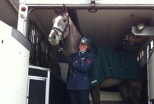 Fred Astaire (Fred) / ISH (Irish), born in 2008 Owned by Anna Coutts-Donald  In February 2013, Fred won his first  outing ever in Lyneham (UK), scoring 77% in his dressage! After this first positive result, we just can't wait to see what else 2013 has in mind for him!