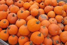 Pumpkins / Because I just like pumpkins...