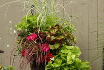 Gardening: Planters / by Amy I