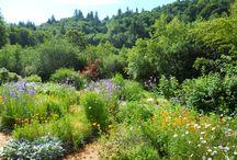 Inspiring Permaculture