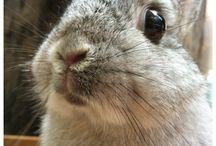 bunny.♥