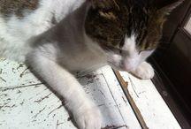 cat / cat/picture