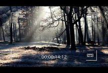 Fotografía tomada en el bosque ¡esconde un secreto mortal difícil de identificar!