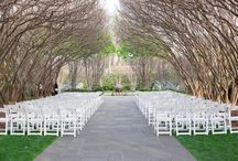 Weddings / by Candice Wesel