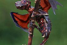 Dragons:)