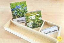 Montessori - Nomenklaturkarten - 3partcards