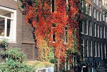 Amsterdam / Mijn geboortestad