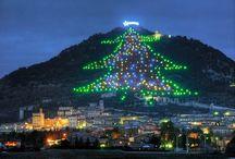 gubbio (pg)albero piu'alto al mondo
