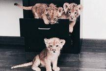 #Animals