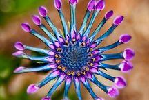 Flowers-Gardening