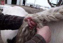 coisas de cavalo