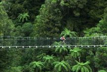 Timber Trail New Zealand