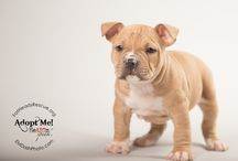 Fat Heads Rescue / Fat Heads Rescue is dedicated to rehoming pitbulls in the Louisville, Ky area.