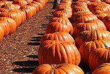 Fall / by Judy LeGrand