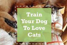 Pet tips