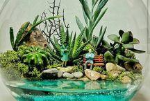 aquário + terrario