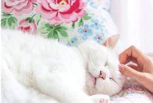 Lo más hermoso gatitos
