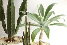 Indoor Biomass / Houseplants, aquariums, indoor gardening, etc.