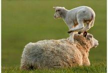 Boerderij en dieren, FARM