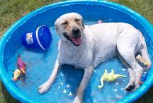Pet Summer Vacation Photo Contest! / From now until July 31st, we are hosting a Summer Photo Contest on Facebook and we want to see your best summer pet photo. It can be a photo from a past summer vacation that you absolutely love or one you will take this summer on an upcoming trip.  The photo with the most votes at the end wins the grand prize!! Be sure to include: • Brief description of your photo • Your pet's name  Winner will be notified by August 2nd on Facebook.