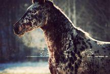 Коне-вдохновение / О вдохновении в лошадях и конном мире.   Без слов.
