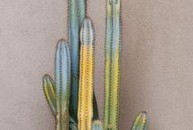 Flora - Succulent & Cacti
