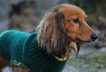 dog knit jacket