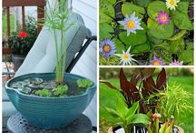 Make an aquatic pond to decorate your garden or terrace