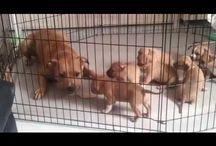 zeta e i cuccioli