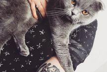 Tatouages chats