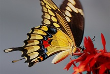 Butterfly's and bugs / by Jenny Gallard