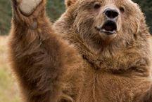 BHS Bears