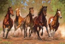 kays horses