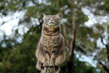 CATS/kitty