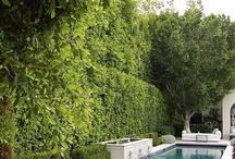 Swimming Pool Area Ideas