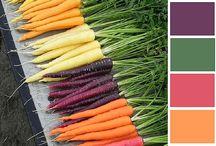 Color Palettes / Color Palettes for Home Decor & Business Branding