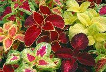 botanic&sera