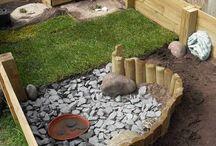 pet tortoise areas bunnies