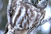 Owls <3 / by Meagan Ramsey