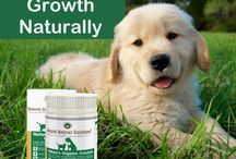 Nature's Organic Calcium / Certified organic for all life stages Calcium is the foundation block for building strong teeth and bones and our aging pets also benefit from a natural calcium source. Nature's Organic Calcium is an organic plant based calcium containing naturally-available zinc, magnesium, boron, iron and other essential nutrients.