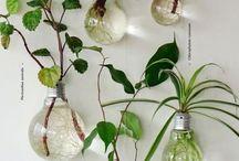 Pflanzen innen