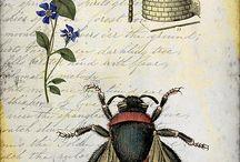 Wild Honey Creations