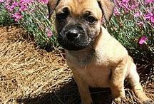 adoptable rescue dogs