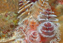Marinebiologi