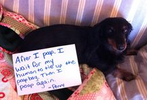 Funnies:  Dog Shaming  / by Carla Rioux